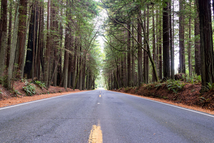 View of a road passing through Humboldt Redwoods State Park with redwood trees visible on either side in California California USA America Redwoods Redwood Redwood Trees Redwood Forest Travel Travel Destination Tourism Plant Nature Day Outdoors Landscape Humboldt Redwoods State Park Forest Tree Road Land Transportation The Way Forward Diminishing Perspective Tree Trunk Trunk WoodLand Tranquility Beauty In Nature Growth No People Treelined