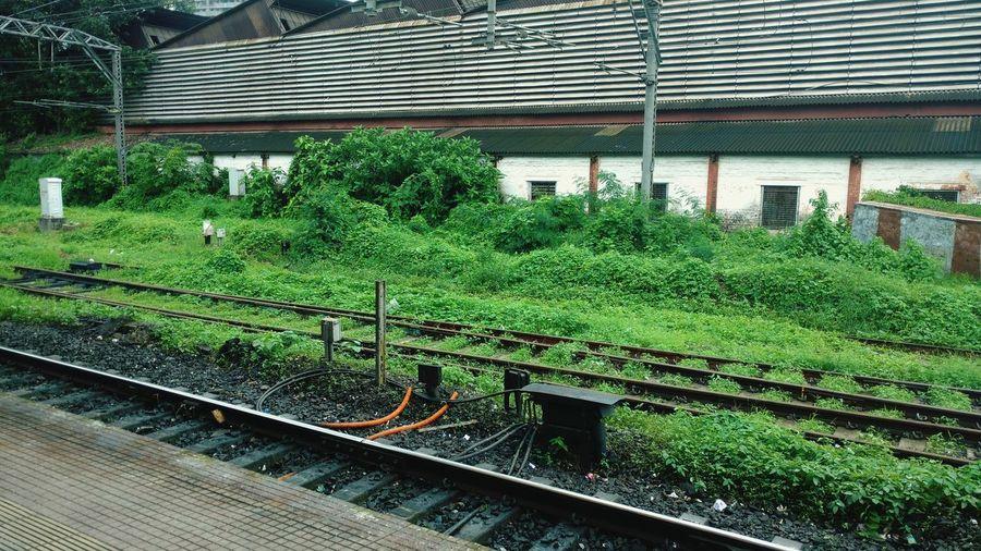 Green Bushes And Trees Nature Railways Mumbai Matunga Mumbai Rains Monsoon Shower Greenery