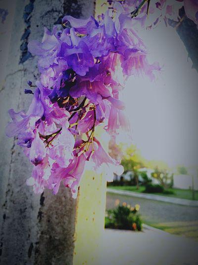 Flower 🙊