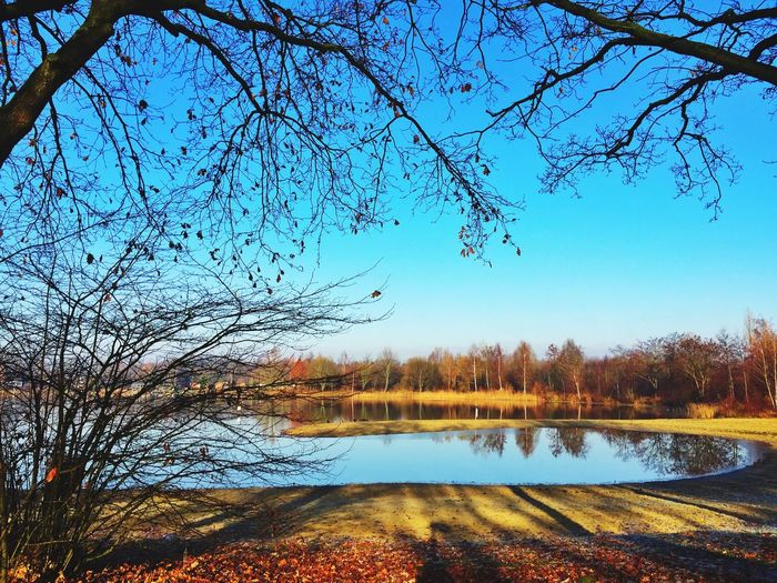 Silent Lake Tree Nature Reflection Beauty In Nature Water Tranquility Scenics Sky Lake Outdoors No People Forest Idyllic Growth Bare Tree Travel Destinations Grass Day
