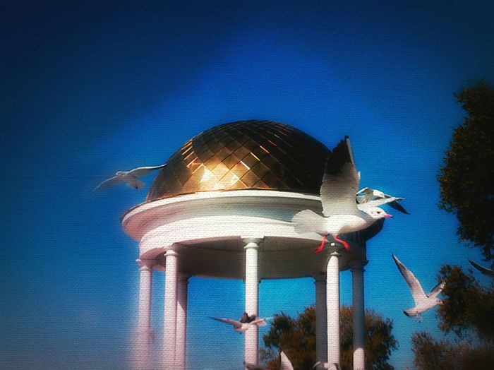 I Love My City Berds Seagulls Seagull Playing With Effects Relaxing Sky Capture The Moment Fly Berd