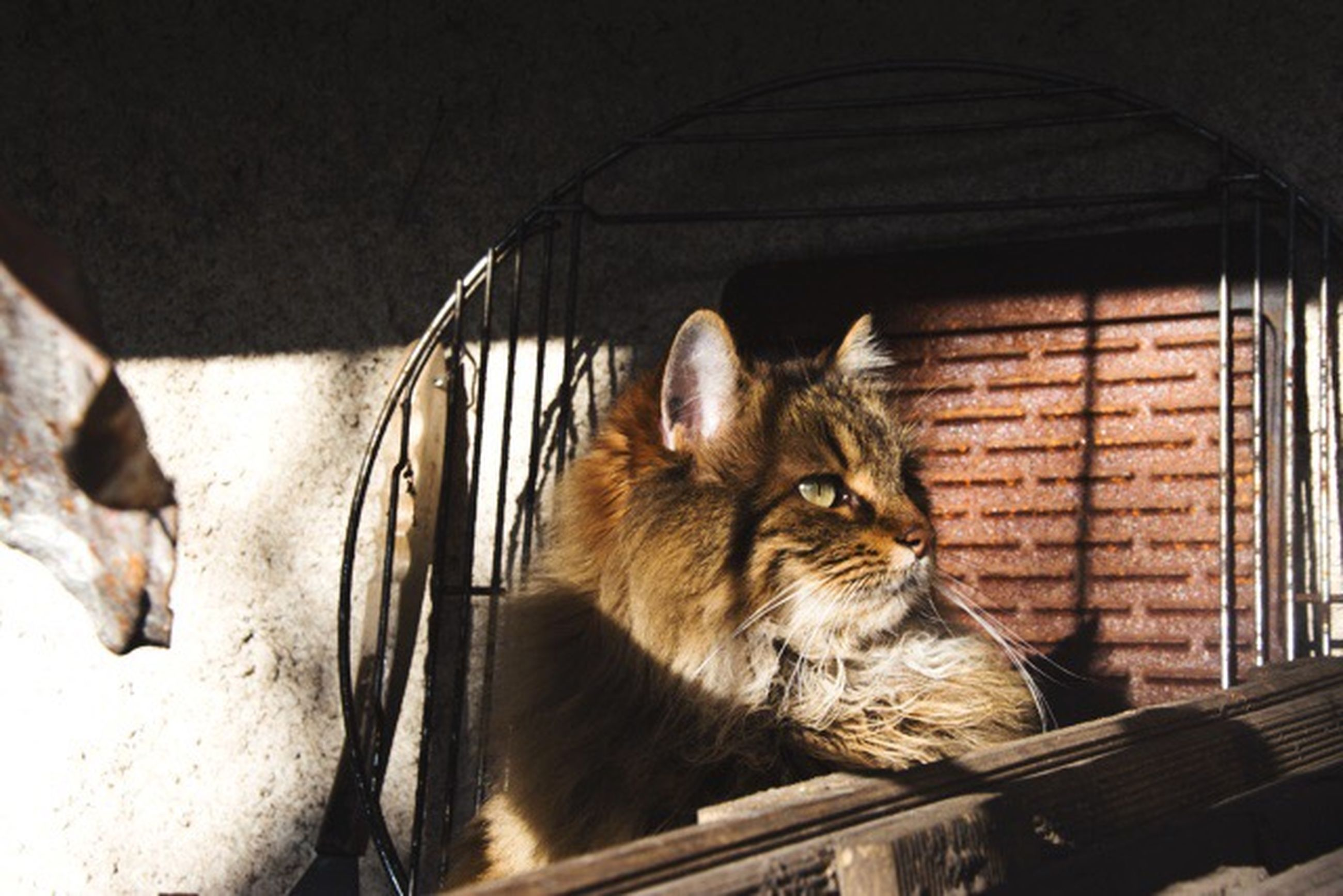 animal themes, one animal, domestic animals, pets, mammal, domestic cat, indoors, cat, feline, sitting, zoology, window, railing, no people, whisker, full length, vertebrate, sunlight, close-up, side view