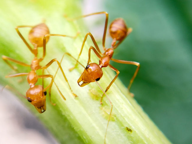 Focus Object ants Ants Ant Life Ant Working Ant Working Nature Ants Close Up Ants Feasting Focus Object Insect Close-up Biology Backgrounds Macrophotography