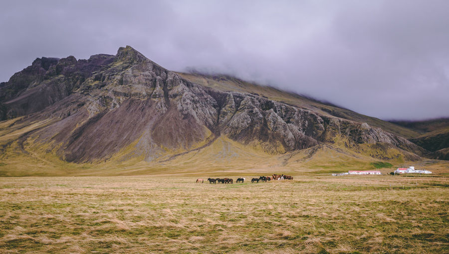 Horses on field by mountains against sky