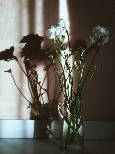 Taking Photos Check This Out Flowers, Nature And Beauty Flowers Vintage First Eyeem Photo