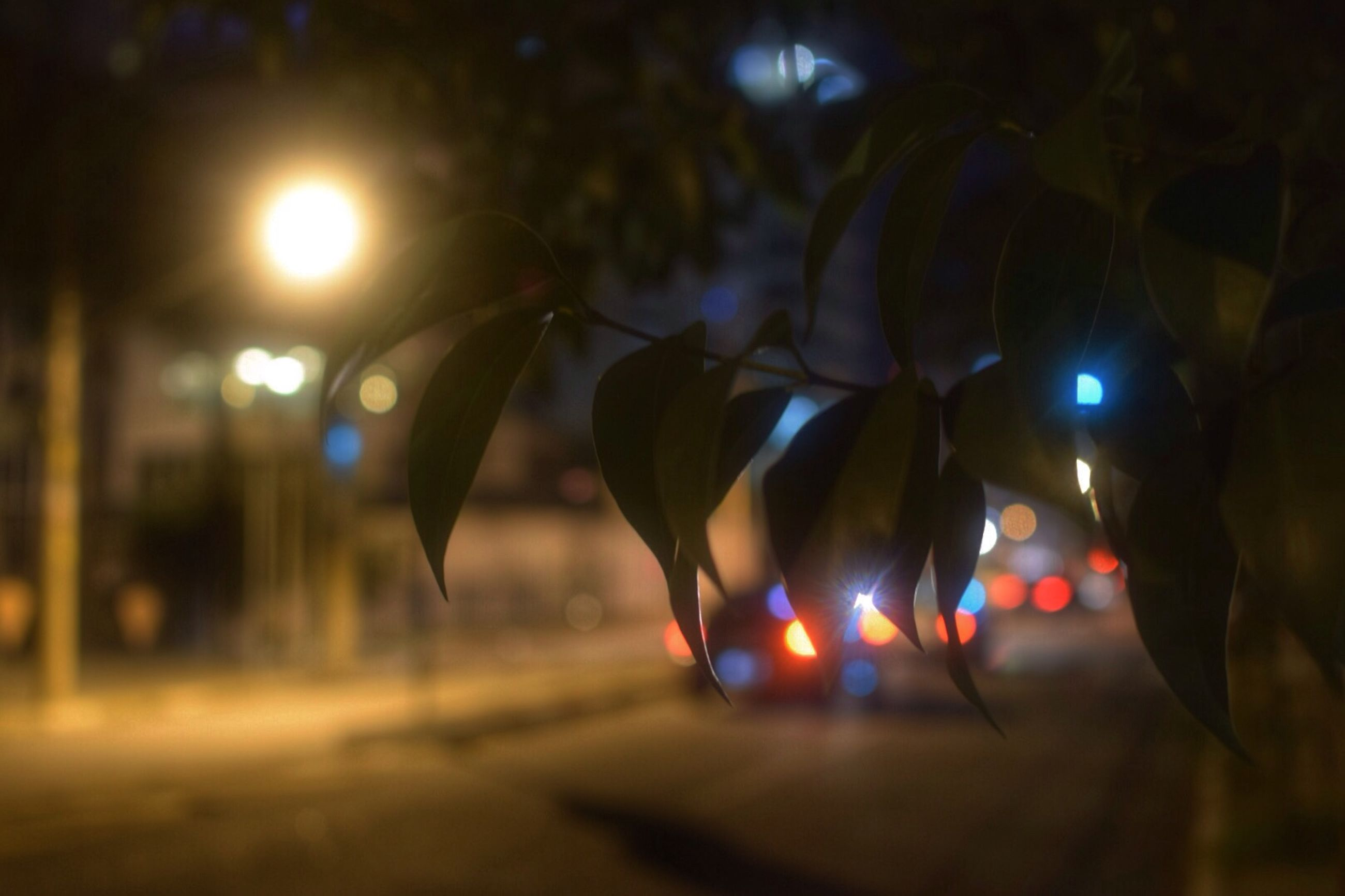 focus on foreground, illuminated, close-up, selective focus, lens flare, night, tree, hanging, no people, nature, sunlight, outdoors, leaf, growth, field, plant, tranquility, decoration, sun, glowing