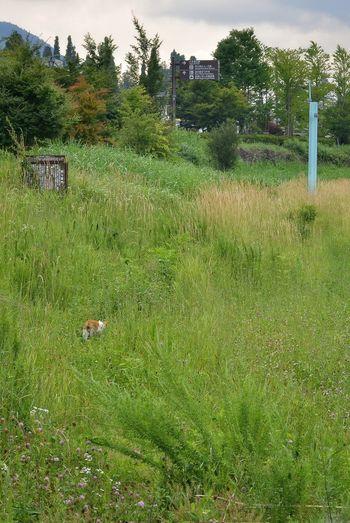 河口湖の湖畔にいた野良猫😼 逃げられてしまった… Stray Cat Walking Around On The Way Cat Walking Cat Watching 野良猫ウォッチング 河口湖 Hello World Enjoying Photography Enjoying Life Plants And Flowers EyeEm Nature Lover