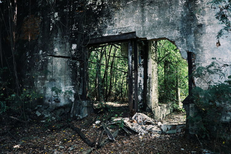 Abandoned building in forest