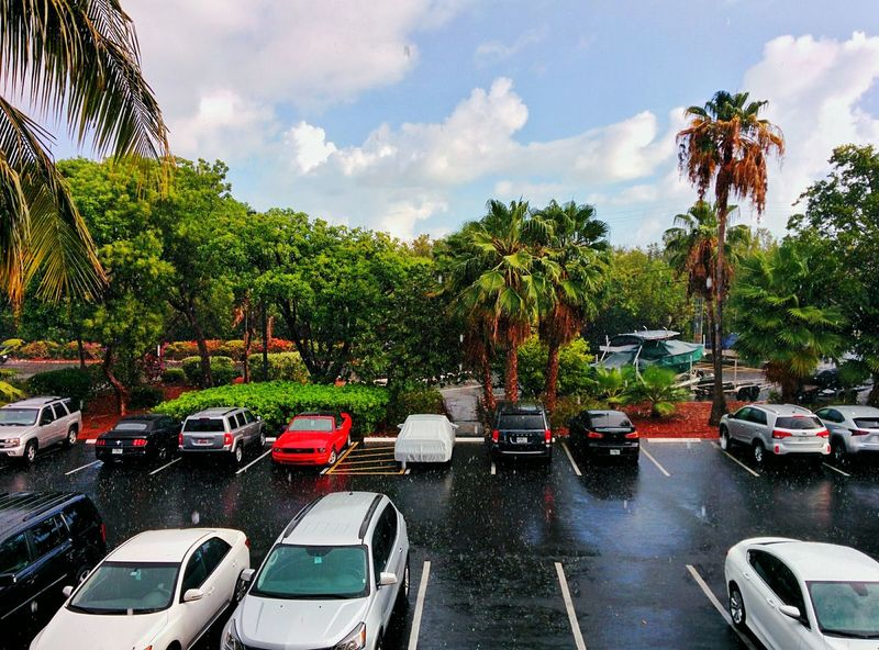 Rain Summerrain Hot Day Sweat Cars Holiday Relaxing Nice Atmosphere View Tree The Great Outdoors - 2016 EyeEm Awards
