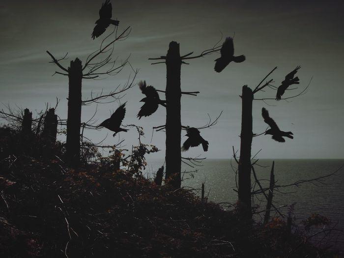 ... suddenly Dark ... Silhouette Tree Trees Wales Autumn Woods Fantasy Birds Crows Seashore Dead Trees Collage Double Exposure Sea птицы берег деревья Фантазия коллаж
