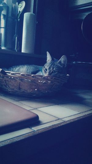 Cat - Nefer First Eyeem Photo
