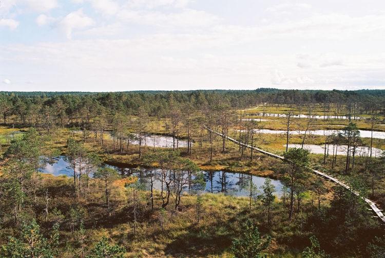 Bog trail Bog