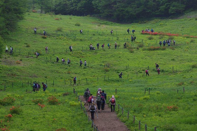 Crowd on grassy land