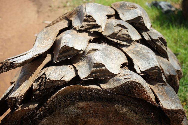 Close-up of rocks on wood