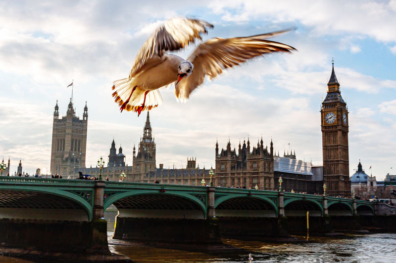The lone seagull flyes above the river thames