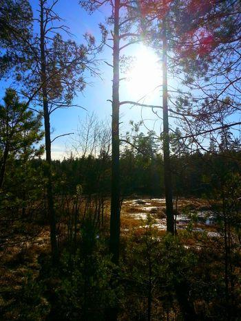 Sun Reflection Landscape_Collection Nature