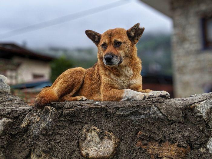 Portrait of a dog on rock