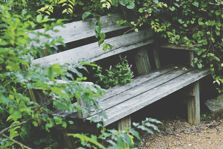 Wood - Material Wooden Bench Outdoors Tranquility Nature Passing Time Cedar Ridge Preserve Hikingadventures Hiking Photography An over grown bench.