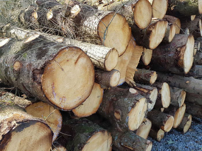 Abundance Deforestation Large Group Of Objects Log Lumber Industry Stack Timber Wood Woodpile