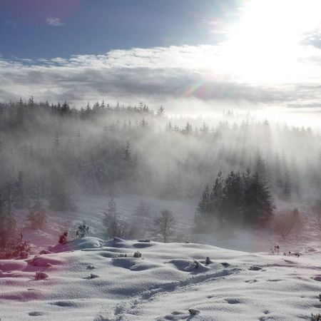 brouillard neigeux Shades Of Winter Shades Wonderful Beauty WOW Fog Nature Landscape Tree Pinaceae Cloud - Sky Morning Forest Sunlight Mountain Scenics Pine Tree Snow Outdoors No People Cold Temperature Day Beauty In Nature Sky Tranquility Tranquil Scene Winter