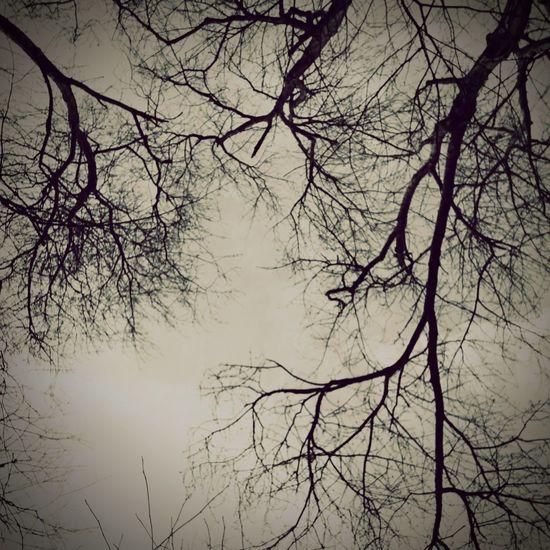Jayguepics EyeEm Best Shots Everything In Its Place EyeEmNature Lover I MonkeySatanMar Treehouse Chillin TreePorn
