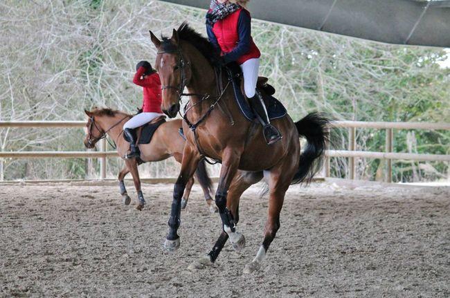 J't'aime bien quand même aha ?❤️ toupie de la jourlais Concours Equestrian Horse
