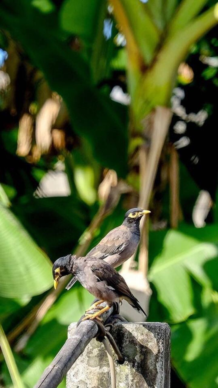 animals in the wild, bird, animal themes, one animal, animal wildlife, perching, focus on foreground, day, no people, nature, outdoors, full length, tree, close-up