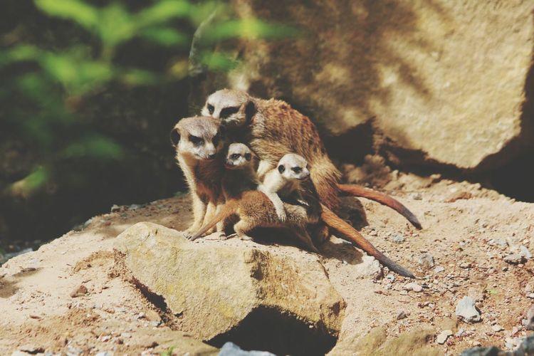 Chipmunks  Family having a Family Time @ Zoo Dresden