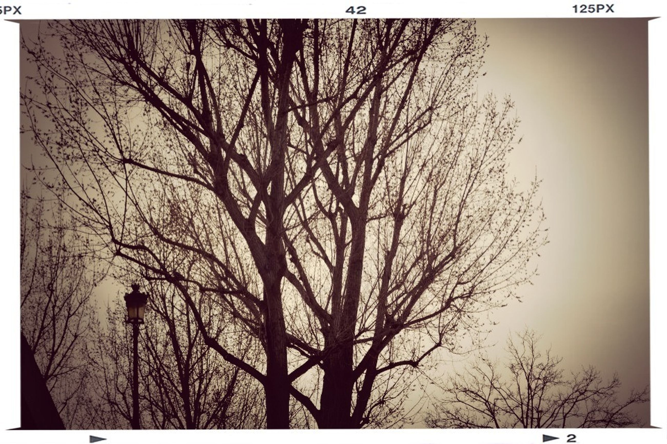 bare tree, tree, transfer print, branch, auto post production filter, tranquility, silhouette, tranquil scene, nature, scenics, low angle view, beauty in nature, sky, tree trunk, clear sky, no people, outdoors, growth, day, non-urban scene