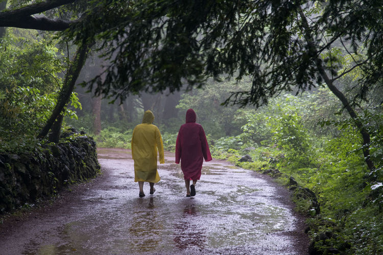 rainy day of Bijarim which is a famous forest in Jeju Island, South Korea Adult Adults Only Beauty In Nature Bijarim Day Forest Full Length JEJU ISLAND  Landscape Men Mountain Nature Outdoors Pathway People Rain Real People Rear View The Way Forward Togetherness Tree Two People Walking Water Women