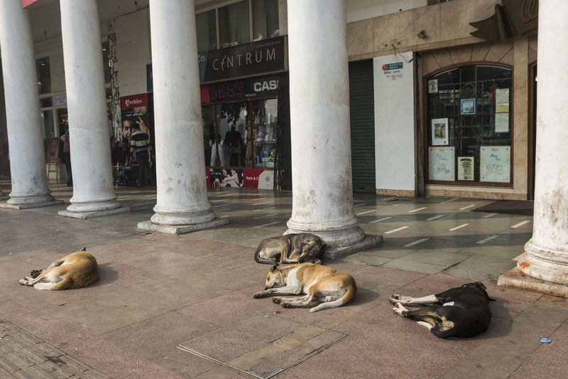 stray dog sleep on street in Connaught Place, Delhi, India Animal Themes Architectural Column Architecture Built Structure City ConnaughtPlace Day Delhi Delhi, India DelhiGram Dogs Exterior Indiapictures Mammal No People Stray Dog Street