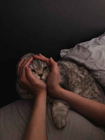 With Love Pet Cat Hand Human Hand Close-up