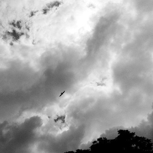 Fly high ✌ Bird Eagle Kingofsky Clouds BlackAndWhite Black White blackandwhitelove trees sky flyhigh beauty beautiful bengaluru bangalore bangalorediaries instalike instaedit instamood instaupload instalove tagsforlikes LikeForlike FollowForFollow PhotoOfTheDay
