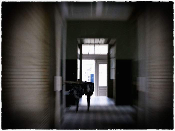 Architecture Day Doors Floor Indoors  Mammal No People The Look Forward Urbexphotography Piano Moments
