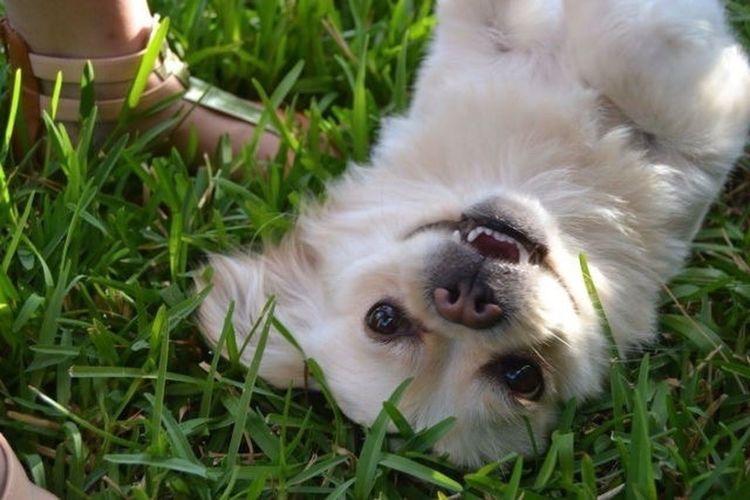 """""""Non esiste psichiatra al mondo migliore di un cucciolo che ti lecca il viso""""."""