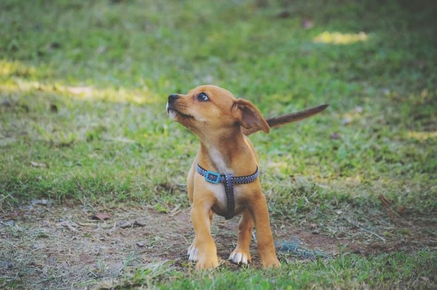 Cachorro Animal Themes Dog Pet Collar Domestic Animals Nature One Animal Pets Focus On Foreground Grass Mammal Outdoors No People Day