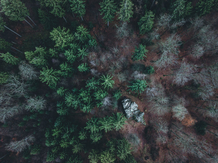 "Droneshot of an place called ""Eiserne Hand"" near Wiesbaden. DJI Mavic Pro Wiesbaden Above Air Beauty In Nature Day Dji Fern Forest Growth High Angle View Leaf Nature No People Outdoors Plant Scenics Taunus Tranquil Scene Tranquility Tree"