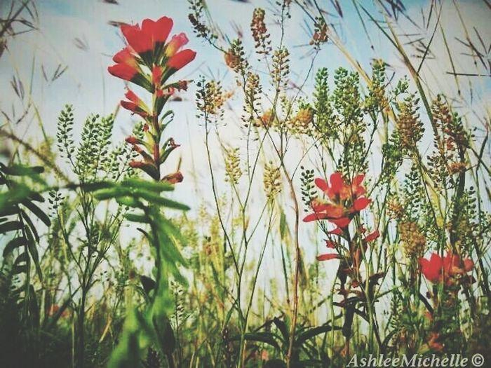 summer session Texastreasures Texas Landscape Flowerstagram
