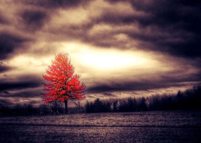 Beauty In Nature Tree Tranquil Scene Nature Tranquility Scenics Autumn Landscape Field Sky Weather No People Cloud - Sky Outdoors Idyllic Sunset Day Grass Autumnsky Sepia Splash Capture The Moment EyeEm Gallery EyeEm Best Edits November