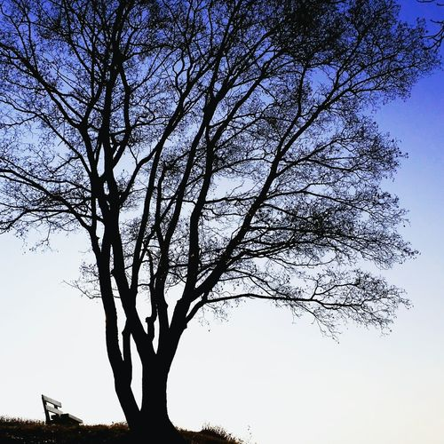 Tree Nature Sky No People Low Angle View Outdoors Beauty In Nature Day Serenity Sitting On A Bench Relaxation Lonliness Lonliest Place Silouette & Sky Silhouettes Of Trees