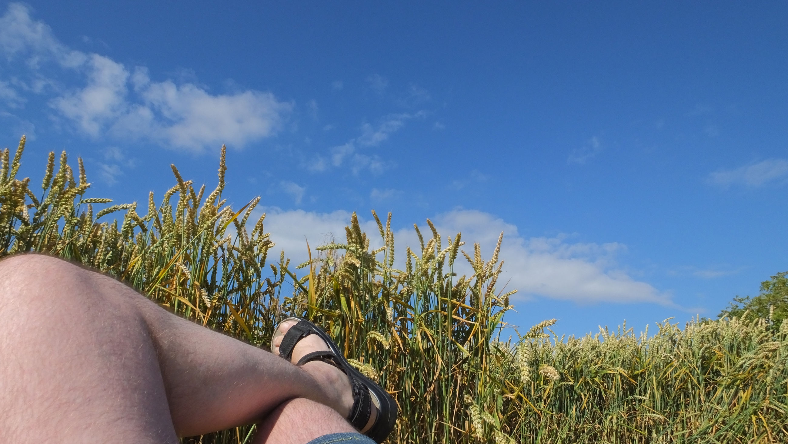 human body part, plant, real people, sky, cloud - sky, body part, field, one person, lifestyles, nature, land, leisure activity, day, personal perspective, grass, human leg, low section, growth, blue, outdoors, hand, human limb, human foot, finger