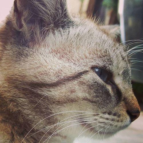 😍😍😍😙😙😙😻😻😻😻😻 love it.. so cute.. so beautiful.. I could spend all the day watching this amazing cat... AmazingCat Beautifulcat Cat Lovecat  Lovecats Loveanimals Micio Gattomeraviglioso Gatto Occhidigatto OcchiBlu Felinefascination Fascinofelino Universeintheeyes