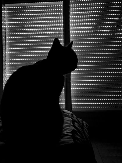 Mysterious Kitty Cat Silhouette Window Indoors  Shadow One Animal Cats 🐱 Close-up Black & White