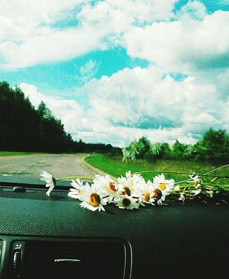 The Week On EyeEm Flower Nature Day