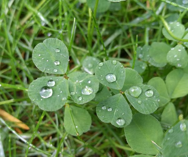 High angle view of water drops on green leaves