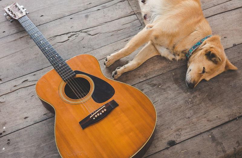 High Angle View Of Dog And Guitar On Floor