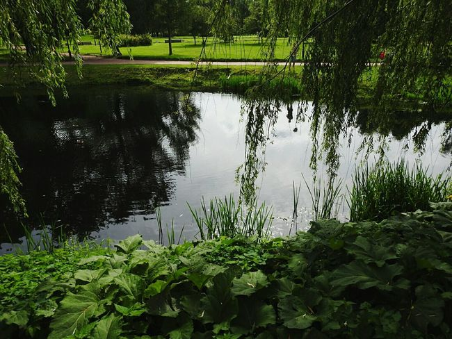 Tavrichesky Garden Water Lake Green Color Beauty In Nature Freshness Majestic Colors Of Sankt-Peterburg Battle Of The Cities Walking Around Green Color Beauty In Nature Sankt-Petersburg Russia