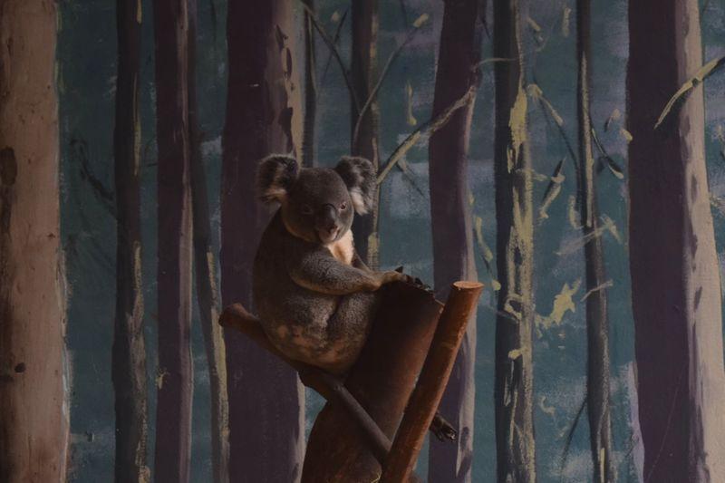 Monkey on tree trunk in zoo
