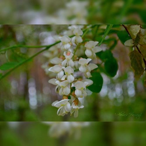 Foto Nature Flowers Vrn Spring Anomie Alessa