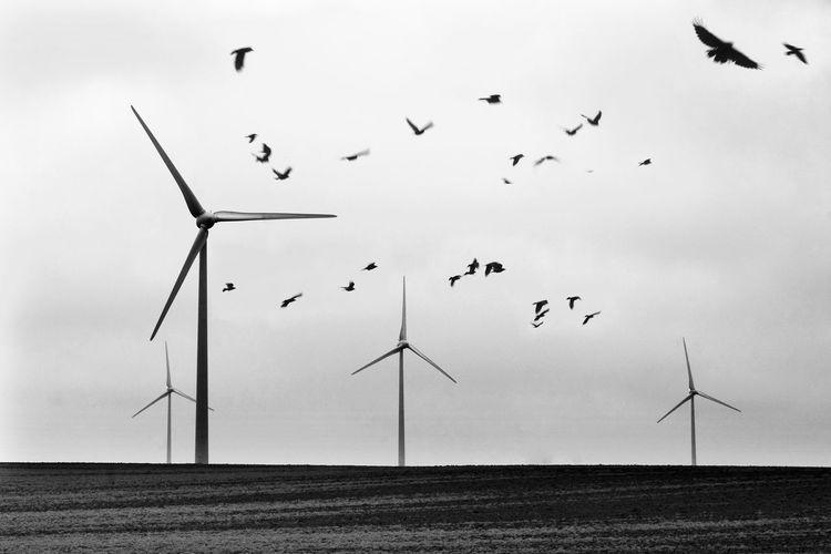 Belgium Atmosphere Bird Black & White Crows Environment Environmental Conservation Renewable Energy